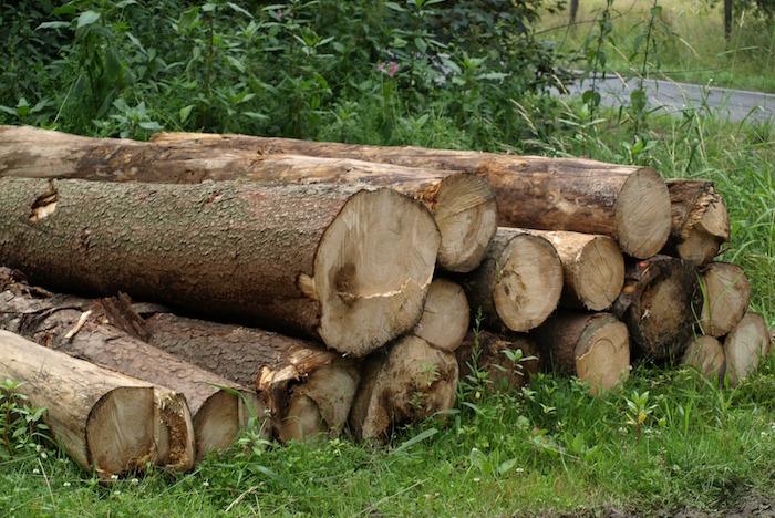 bois-tronc-d_arbres-champ-route-Photo-Pixabay-via-INFOSuroit